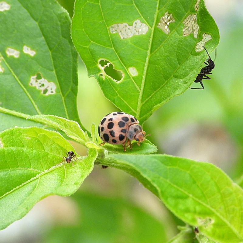 植物の病気・害虫の画像