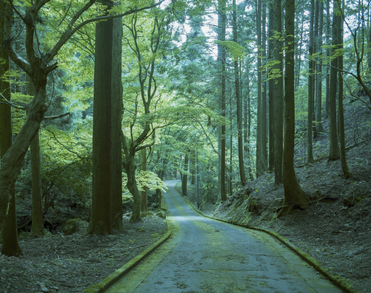 初夏の京都大原~古知谷阿弥陀寺/清々しい新緑と静寂に包まれる里山に