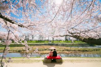 前撮り 京都 桜