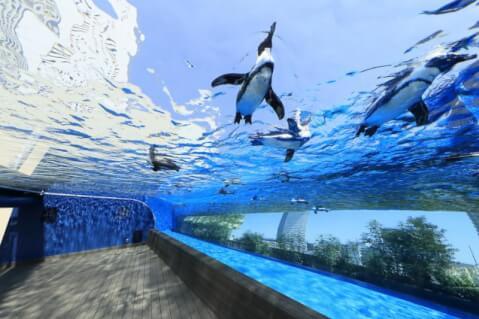 yutai-aquarium