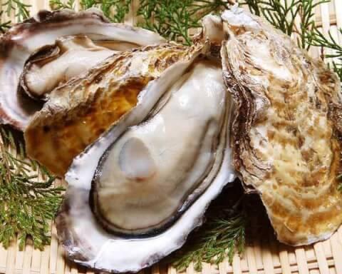 時間無制限飲み放題 牡蠣バサラ 府中 東京 おすすめ 牡蠣食べ放題