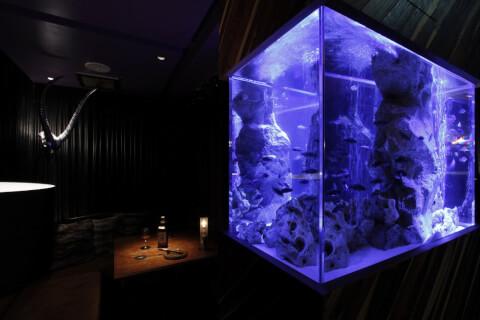DEN新宿 水槽 新宿 デート ディナー ランチ 居酒屋 カフェ レストラン 個室