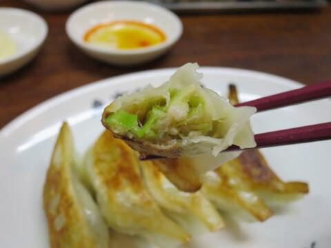 restaurant_sancha_gyoza
