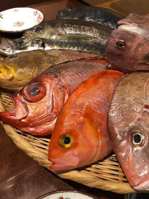 新橋 居酒屋 つばき庵 ザル見せ鮮魚盛り