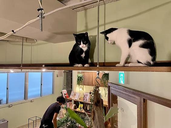 """ネコ好き専用シェアオフィス? 人と不動産の小上馬大作さんが考える、""""人を輝かせる""""不動産のつくり方"""