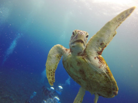 沖縄県 宮古島 2ボート体験ダイビング! 器材&GoPro無料レンタル・ランチ付き!