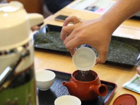 埼玉県 所沢市 トトロの森 狭山丘陵の裾野に位置する1951年創業の茶畑で茶摘み体験
