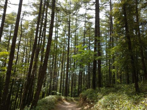 山梨県 甲州市 7歳から参加OK・初心者歓迎! お手軽登山  日本百名山の大菩薩嶺トレッキング! 絶景の紅葉を満喫ツアー‼