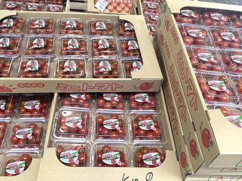 宮崎県 宮崎市 競りの活気と美味しく楽しく! 宮崎中央卸売市場・見学ツアー(朝食付き)☆