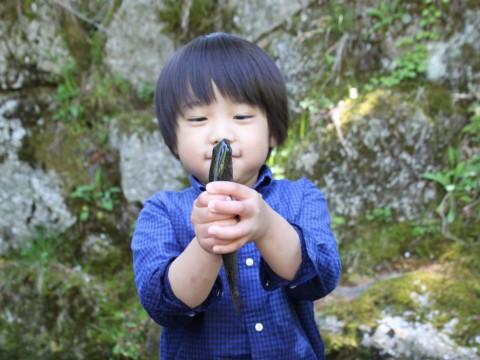 岐阜県 揖斐高原 【マスつかみと塩焼き&BBQ体験】5歳から参加可能・自然をたっぷり味わおう! ご家族・お友達・カップルで楽しんじゃおう♪