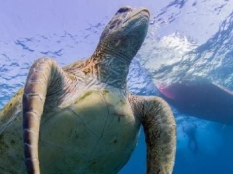 鹿児島県 沖永良部島 【体験ダイビング】遭遇率90%以上 ☆ ウミガメ天国の 沖永良部島で体験ダイビング(2dive)