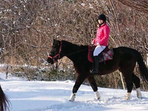 青森県 むつ市 初心者大歓迎!乗馬体験・30分乗馬体験と馬とふれあい(1時間)