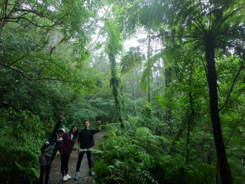 鹿児島県 奄美大島 東洋のガラパゴス! 金作原とマングローブ原生林を巡るSUP & カヌー1DAYプラン・GoPro写真無料プレゼント