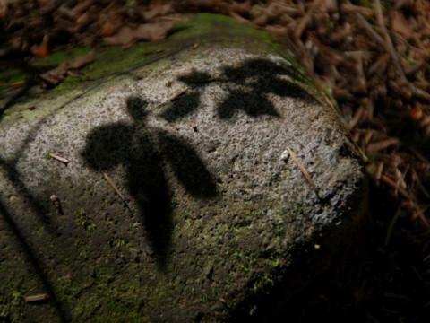 北海道 釧路市 阿寒湖温泉 【1人様限定】雄阿寒岳(1370m)ガイド付き登山体験