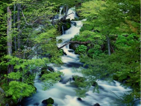 北海道 釧路市 阿寒湖温泉 雄阿寒岳の麓の原生林の中でのんびりと森林浴をしながらトレッキング☆