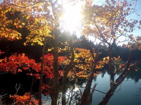 北海道 釧路市 阿寒湖温泉 エメラルドグリーンに染まる神秘の湖☆ オンネトー湖畔で森林浴を思う存分に満喫するトレッキング☆