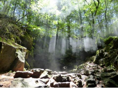 山梨県 鳴沢村 青木ヶ原樹海・洞窟探検・プレミアムBコース