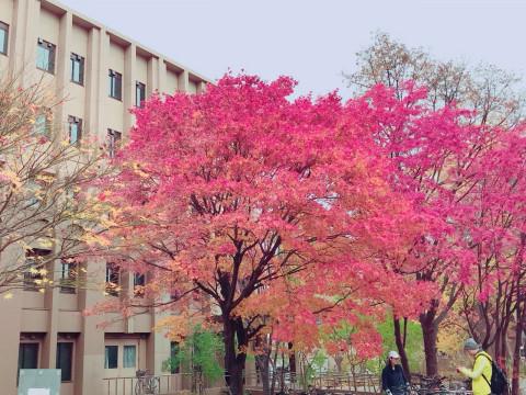 北海道 札幌市 受験生必見!!北大OGによる北海道大学キャンパスツアー
