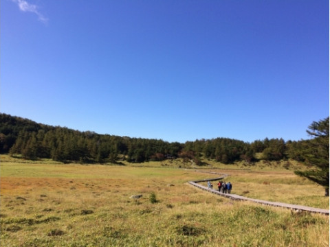 長野県 東御市 【2人様以上】 池の平湿原フラワーハイク ☆ 人気急上昇の湿原を歩き、咲く植物をゆっくりと鑑賞しましょう