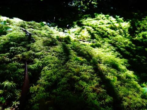 山梨県 富士吉田市 【2人様以上】富士山お中道ハイキング ☆ 完全貸切プライベートツアー ♪