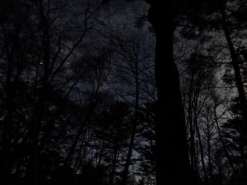 山梨県 鳴沢村 【2人様以上】 夜の青木ヶ原樹海サイレントハイク ☆ 完全貸切プライベートツアー