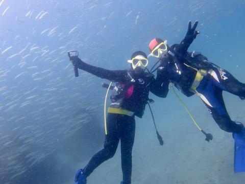 DivingService川奈日和