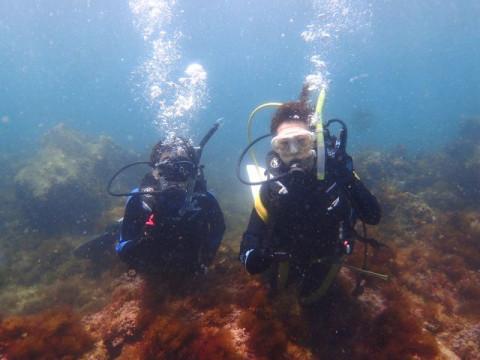 静岡県 伊東市  【2人様以上】 体験ダイビング ☆ 川奈に住むウミガメに出会えるかも?!カップル・女性同士におススメ・水中写真プレゼント ♪