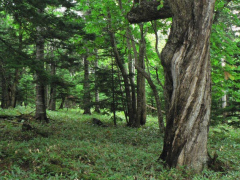 北海道 斜里町 【 2人様以上 】 知床の海と森、そして絶景を堪能 ☆ 原生林体験と知床半島望洋エコツアー