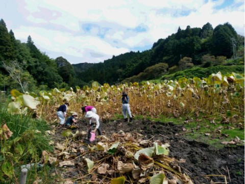 奈良県 山添村 【農業体験】 ☆ 大人だけで! 採れたてのレンコンを使った食事とレンコン掘り体験・お土産付き
