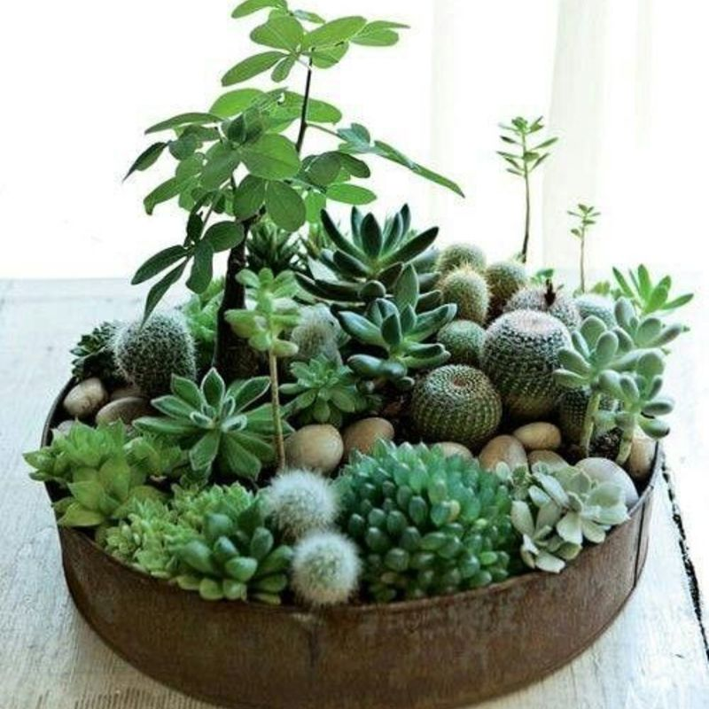 Invite nature in with 20 incredible indoor plants ideas homesthetics 11