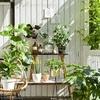 【定番】屋外で楽しめる観葉植物は絶対これ!