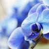 珍しい胡蝶蘭~みんな驚く胡蝶蘭の魅力~