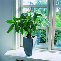 観葉植物の購入は通販で!シーンとサイズで選ぶおすすめ10選