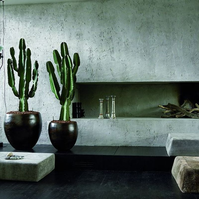Huge cacti great eyecatchers in this minimal interior via garrison hullinger