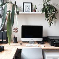 おしゃれな観葉植物は通販サイトで!【シーン別】おすすめ8選