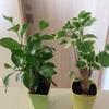 観葉植物の名前を調べる方法と品種の写真紹介