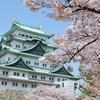 名古屋と胡蝶蘭の関係をご存知ですか?