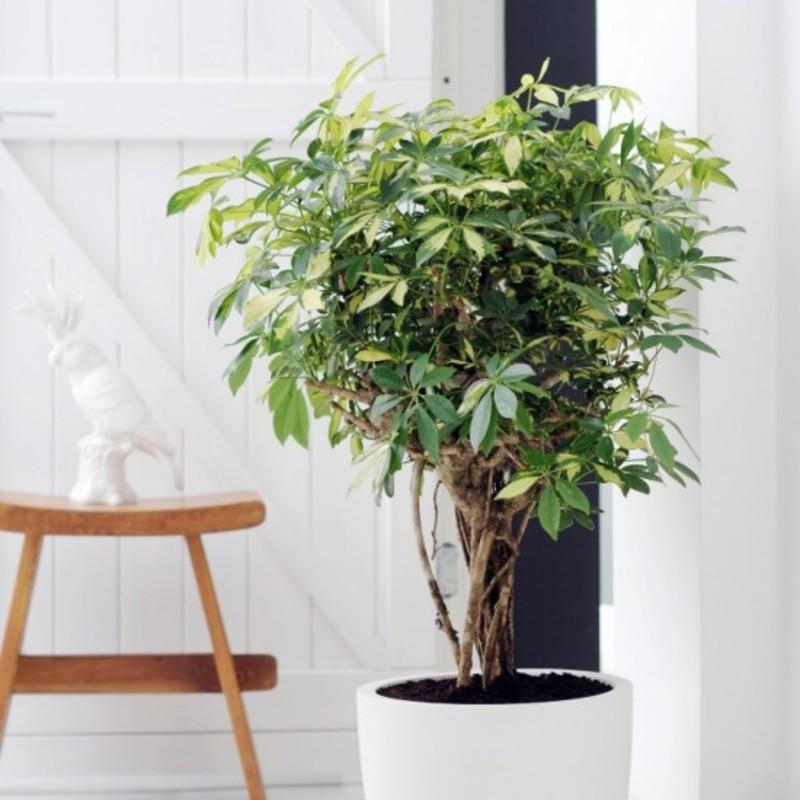 House plants 5 e1423880239484