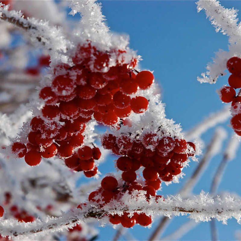 Derevya gody rasteniya sneg zima 25593