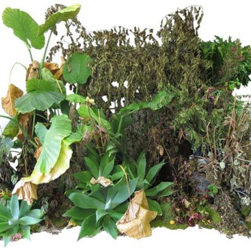 1410549179000 foliage odl