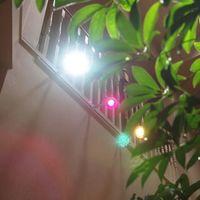 観葉植物をLED照明で育てる方法とは?