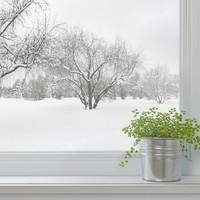観葉植物 冬対策