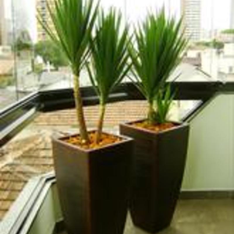 Vasos e plantas em geral 224034 image
