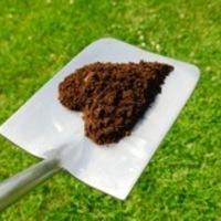 正しい肥料でモンステラを元気に育てる方法