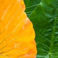 【徹底解説】モンステラの葉が黄色になる原因と対処法!