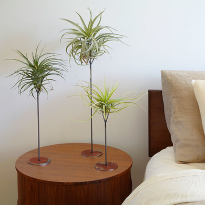 Air plant bedside decor sun 0116 xl