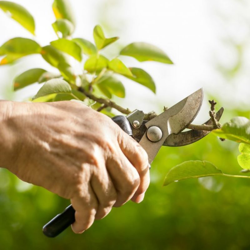 Tree pruning guide 1024x683