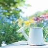 胡蝶蘭の寿命はどれくらい?~胡蝶蘭の驚きの寿命と育て方のコツをご紹介~