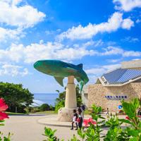 胡蝶蘭鑑賞は沖縄美ら海水族館がキーワード