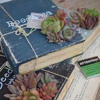 【調査】多肉植物についての本皆何読んでいるの?